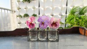 Altan Eksperimentet Lav Urban Garden på din altan